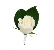 G-Ray-Florist-Online-Flower-Delivery-Kl-Penang-White Rose